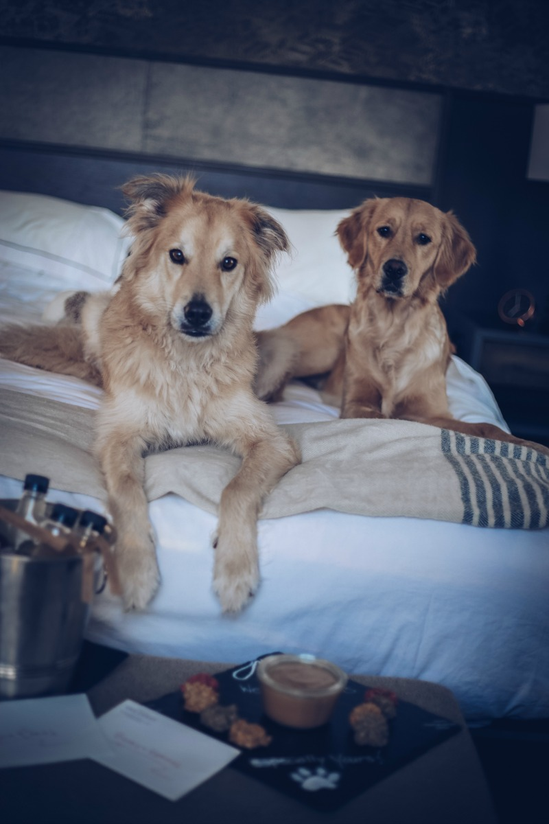 PLAN A PET FRIENDLY TRIP TO AUSTIN
